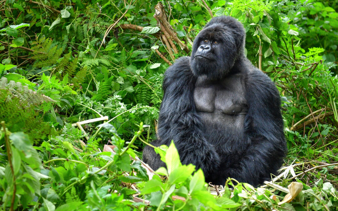 Episode 6: The Art of negotiating with a 350-pound gorilla
