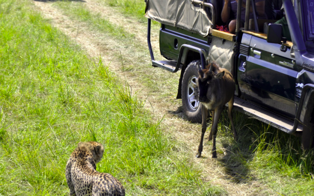 Episode 17: Surreal animal sightings on safari: David and Ronah return to the podcast