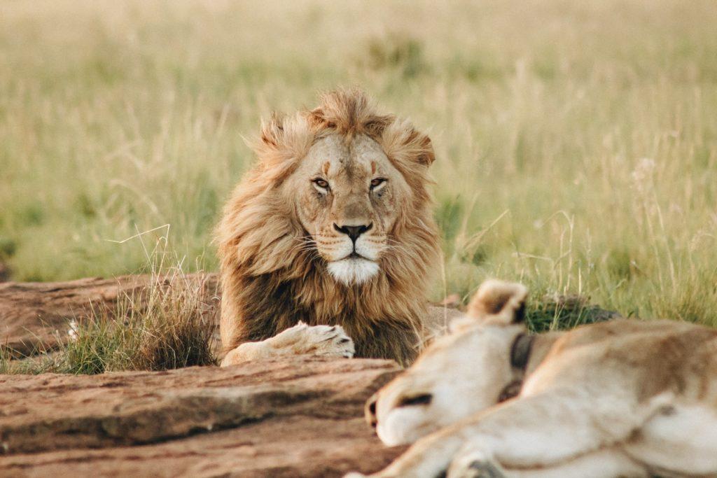 Metamo: African safari destinations